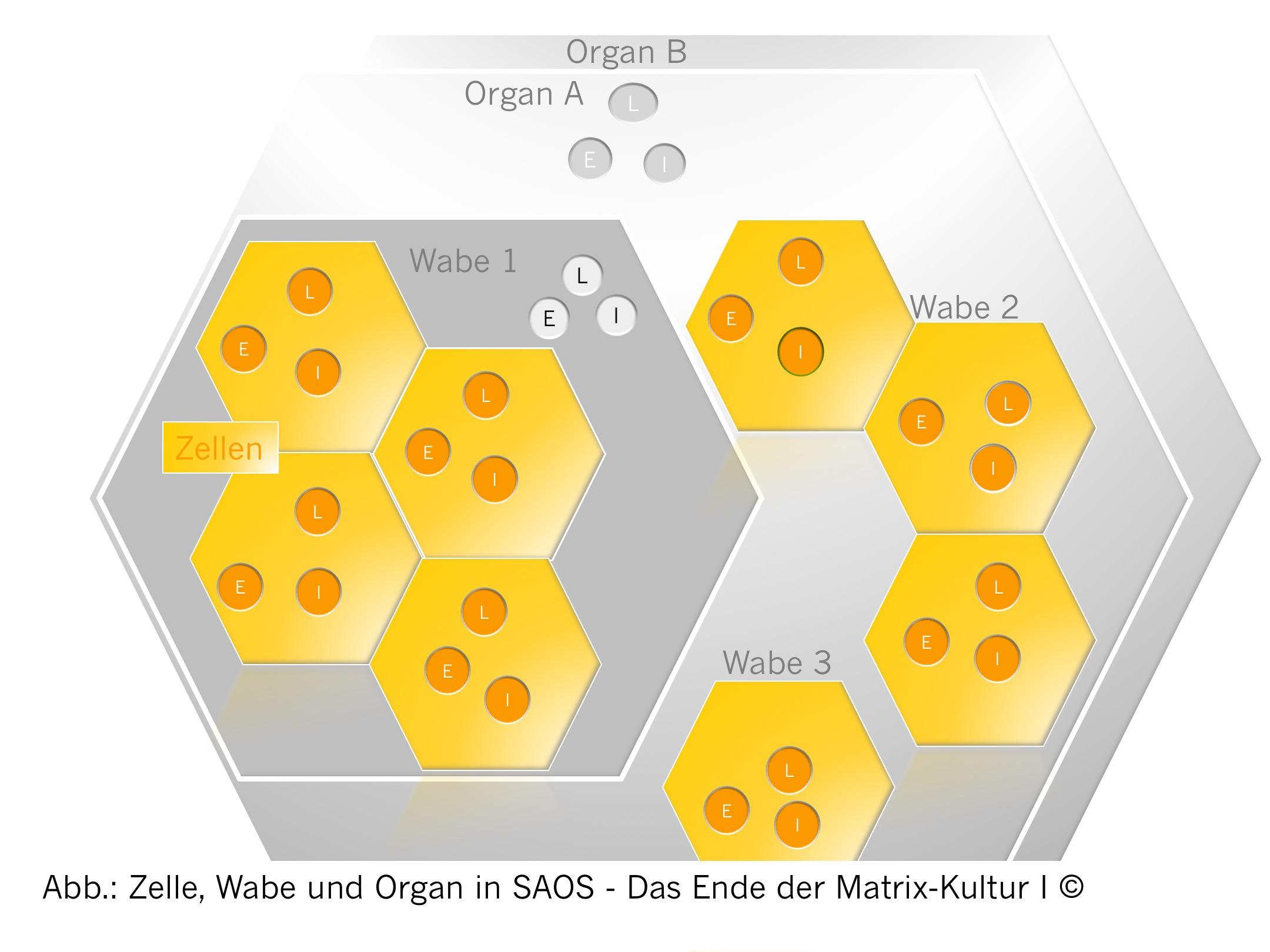 Agile (selbst-adaptive) Wabenorganisation SAOS