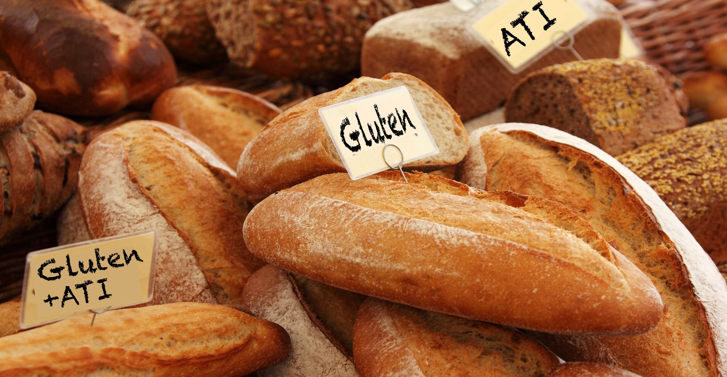 Was genau vertragen wir da eigentlich nicht? Gluten oder ATI?